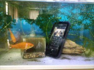 「LifeProof風」の低価格iPhone7防水ケースを水槽に沈めて金魚を写真撮影した結果【レビュー】