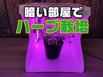 【実験】植物育成用LEDテープライトを使って暗い部屋でハーブを栽培できるか?